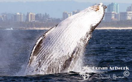 Whale Photos